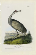 Antiques:Posters & Prints, Whooping Crane Audubon Royal Octavo Print. Plate number 314 highlights the Whooping Crane. A young crane is shown walking al...