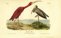 Antiques:Posters & Prints, Scarlet Ibis Audubon Royal Octavo Print. Plate number 359, the Scarlet Ibis, depicts two males, one young, one in adulthood....