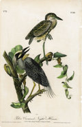 Antiques:Posters & Prints, Yellow Crowned Night Heron Audubon Royal Octavo Print. Plate number 364 features the yellow crowned night heron; two young m...