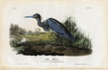 Antiques:Posters & Prints, Blue Heron Audubon Royal Octavo Print. Plate number 372 featuresthe Blue Heron. Images of birds with colorful plumage are a...