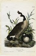 Antiques:Posters & Prints, Canada Goose Audubon Royal Octavo Print. Plate number 376, theCanada Goose shows a male and female of the species. The fema...