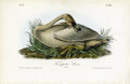 Antiques:Posters & Prints, Trumpeter Swan Audubon Royal Octavo Print. Plate number 383 also features the Trumpeter Swan, but in this version he shows u...