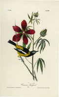 Antiques:Posters & Prints, Common Troupial Audubon Royal Octavo Print. Plate number 499highlights the Common Troupial, and once again we are privy to ...
