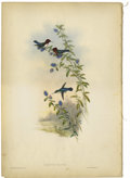 Prints:American, JOHN GOULD AND H.C. RICHTER (British, 1804-1881). Calypte Helen.Colored lithograph. 21.25 x 14.75in.(both pages). Credits a...(Total: 2 Items)