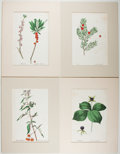Books:Prints & Leaves, Group of Four Nineteenth-Century Hand-Colored Prints of Plants.Approx. 12.75 x 8.25 inches. Matted. Very good.... (Total: 4 Items)