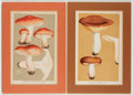 Books:Prints & Leaves, Group of Eight Nineteenth-Century Color Prints of Mushrooms. Approx. 8.5 x 5.5 inches. Matted. Very good.... (Total: 8 Items)