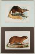 Books:Prints & Leaves, Group of Four Early Twentieth-Century Hand-Colored Animal Prints.Approx. 6 x 8.75 inches. Matted. Very good.... (Total: 4 Items)