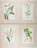 Books:Prints & Leaves, Group of Four Nineteenth-Century Hand-Colored Prints of Plants. Approx. 12.75 x 8.25 inches. Matted. Very good.... (Total: 4 Items)