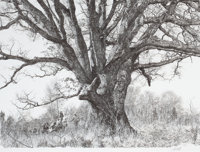 PAUL CALLE (American, b. 1928) The Landmark Tree, 1980 Offset lithograph 20 x 26-1/4 inches (50.8