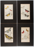 Books:Prints & Leaves, Group of Four Nineteenth-Century Color Prints of Butterflies.Approx. 6.75 x 3.75 inches. Matted. Very good.... (Total: 4 Items)