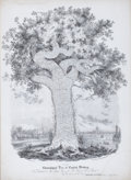 Prints, THIS CHRONOLOGICAL TREE OF ENGLISH HISTORY, IS DEDICATED TOROBERT PEEL. Lithograph by W. and J.O. Clerk. 24-1/2 x 17-1/...