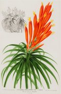 Prints, P. STROOBANT (Belgium, Late 19th/Early 20th Century). Botanical Studies (3). Color lithographs. 11-3/4 x 8-1/4 inches (2... (Total: 6 Items)