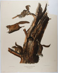 Books:Prints & Leaves, J. J. Audubon. Common Flying Squirrel. Audubon, 1843.Approx. 27.25 x 21.5 inches. Crudely lacking upper corner. Poo...