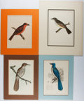 Books:Prints & Leaves, Group of Four Nineteenth-Century Color Prints of Birds. Approx.11.25 x 8.25 inches. Matted. Very good.... (Total: 4 Items)
