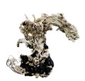 "Minerals:Native Metals, NATIVE SILVER SPECIMEN - ""THE DRAGON"". ..."