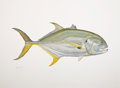 Mainstream Illustration, FLICK FORD (American, b. 1954). Crevalle Jack, 2008.Watercolor on paper. 22.5 x 30.5 in.. Signed lower left. ...