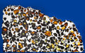 Meteorites:Palasites, ESQUEL - LARGE PARTIAL SLICE OF ONE OF THE MOST BEAUTIFULMETEORITES IN THE WORLD. Pallasite - PAL. Chubut,Argentina ...