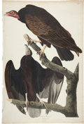 Books:Natural History Books & Prints, John James Audubon. Turkey Buzzard. Cathartes Atratus.Male 1. Young 2. No. 31. Plate CLI. Drawn from Nature by...