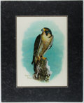 """Books:Prints & Leaves, Striking Original Water Color of a Peregrine Falcon. Matted to anoverall size of 16"""" x 20"""". Signed by the artist whose name..."""