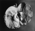 Photographs:20th Century, BERENICE ABBOTT (American, 1898-1991). Supersight Apple,circa 1940. Gelatin silver contact print, circa 1970. 14-1/4 x ...