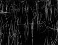 Photographs:20th Century, BRETT WESTON (American, 1911-1993). Reeds, Oregon andBrett Weston: Photographs From Five Decades, 1975. Gelatinsil... (Total: 2 Items)