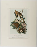 Books:Prints & Leaves, John James Audubon. Hand-Colored Lithograph Entitled, CarolinaTurtle Dove, from the second octavo edition of Au...