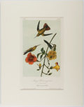 Books:Prints & Leaves, John James Audubon. Hand-Colored Lithograph Entitled, MangoHummingbird, from the second octavo edition of Audub...