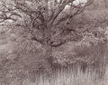 Photographs:20th Century, GEORGE TICE (American, b. 1938). Oak Tree, Holmoel, NJ,1970. Gelatin silver, 1980. 15-1/4 x 19-3/8 inches (38.7 x 49.2 ...
