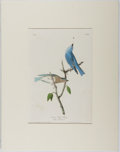 Books:Prints & Leaves, Audubon. Hand-Colored Lithographic Print of the Arctic Blue Bird. Plate 136. Ca. 1840. Octavo, measuring approx. 10....