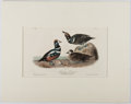 Books:Prints & Leaves, Audubon. Hand-Colored Lithographic Print of the HarlequinDuck. Plate 409. Ca. 1840. Octavo, measuring approx. 1...