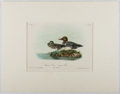Books:Prints & Leaves, Audubon. Hand-Colored Lithographic Print of the AmericanGreen-winged Teal. Plate 392. Ca. 1856. Octavo, measuri...