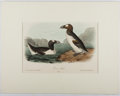 Books:Prints & Leaves, Audubon. Hand-Colored Lithographic Print of the Great Auk.Plate 465. Ca. 1856. Octavo, measuring approx. 10.25 ...