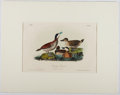 Books:Prints & Leaves, Audubon. Hand-Colored Lithographic Print of the Ruddy Duck.Plate 399. Ca. 1856. Octavo, measuring approx. 10.25...
