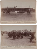 Photography:Cabinet Photos, Two Cabinet Photographs, Steers and Buffalo, 1887. ... (Total: 2Items)