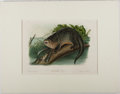 Books:Prints & Leaves, Audubon. Hand-Colored Lithographic Print of the CanadaOtter. Plate LI. Ca. 1850. Octavo, measuring approx. 10 x...