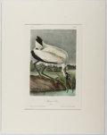Books:Prints & Leaves, Audubon. Hand-Colored Lithographic Print of the Wood Ibis.Plate 361. Ca. 1840. Octavo, measuring approx. 10.25 ...