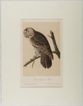 Books:Prints & Leaves, Audubon. Hand-Colored Lithographic Print of the Great CinereousOwl. Plate 35. Ca. 1856. Octavo, measuring appro...