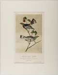 Books:Prints & Leaves, Audubon. Hand-Colored Lithographic Print of Audubon'sWood-Warbler. Plate 77. Ca. 1856. Octavo, measuring approx...