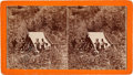 """Photography:Stereo Cards, Stereoview: """"Miner's Tent and Miners, Deadwood Gulch""""...."""