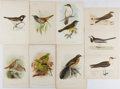 Books:Prints & Leaves, [Birds]. Group of Nine 19th Century Color Prints. Largest approx. 9x 6 inches. Very good....