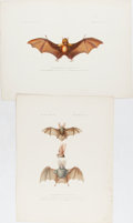 Books:Prints & Leaves, Paul Louis Oudart, artist. Pair of Chromolithograph Illustrationsof Bats. 13 x 9.5 inches and 9.5 x 13 inches. Damp stainin...