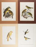 Books:Prints & Leaves, Group of Four 19th Century Color Prints of Birds. Approx. 11 x 8.25inches. Matted. Very good....