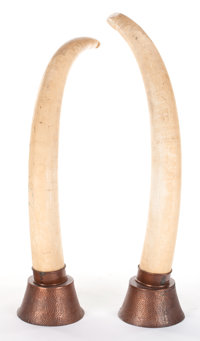 LARGE PAIR OF AFRICAN MALE ELEPHANT TUSKS IN COPPER STANDS 60 inches (152.4 cm) (outside curve) 57 inches (144