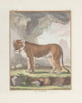 Decorative Prints, European:Prints, FRAMED SET OF FOUR HAND COLORED ENGRAVINGS OF BIG CATS BY BUFFON .Circa 1778. 10 x 8 inches (25.4 x 20.3 cm). Well presente...(Total: 4 Items)