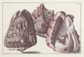 Decorative Prints, European:Prints, A PAIR OF FRAMED HAND COLORED ENGRAVINGS OF SHELLS BY GUALTIERE .Circa 1746. 10-1/4 x 15-1/4 inches (26.0 x 38.7 cm). Frame...(Total: 2 Items)