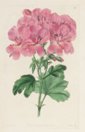 Decorative Prints, European:Prints, A SET OF SIX FRAMED HAND COLORED ENGRAVINGS OF GERANIUMS BY ROBERTSWEET . Circa 1832. 8-1/2 x 5-1/2 inches (21.6 x 14.0 cm)...(Total: 6 Items)