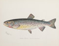 Decorative Prints, American:Prints, FRAMED SET OF SIX CHROMOLITHOGRAPHS OF TROUT BY DENTON . Circa1896-1904. 9 x 11-1/4 inches (22.9 x 28.6 cm). ... (Total: 6 Items)