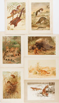 Books:Natural History Books & Prints, [Natural History Prints]. Seven Lithographed Color Plates of Quadrupeds. Extracted from volume one of Richard Lydekker's T...