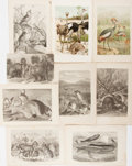 Books:Natural History Books & Prints, [Natural History Prints]. Nine Lithographed or Engraved Plates of Quadrupeds and Birds. Extracted from volume one of Richard...