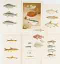 Books:Prints & Leaves, [Fish]. Group of Seven 19th Century Color Prints. Approx. Varioussizes. Very good....